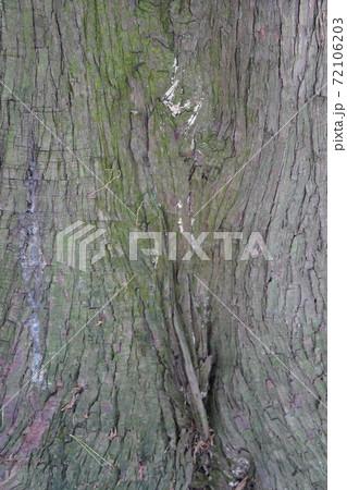 苔が生え、くぼみがある樹皮のテクスチャ 72106203