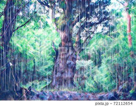 縄文杉の雨 72112654