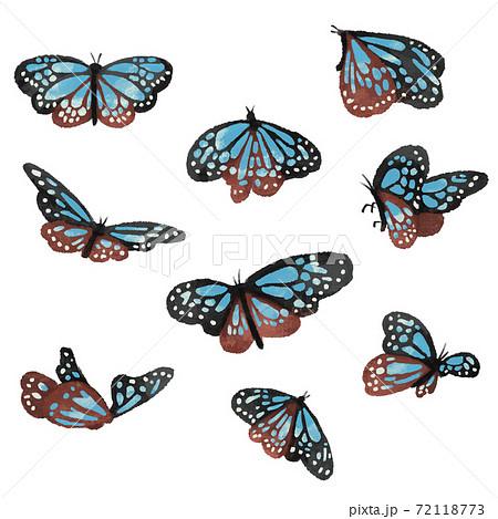 アサギマダラの蝶のイラスト・ナチュラルカラーのイラスト素材 ...
