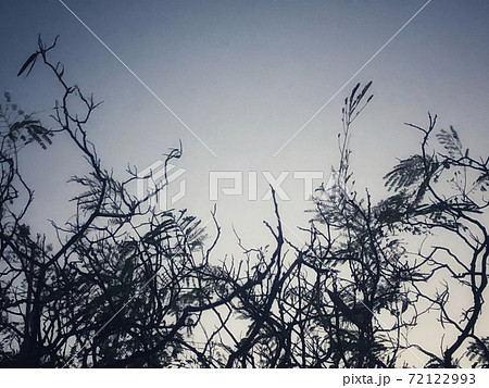 夕暮れの薄暗い空と枯れ木の枝と葉っぱのシルエットがある冬の風景 72122993