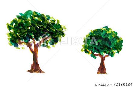 絵具で描写された木のイラスト 72130134