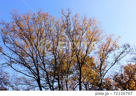 秋晴れになった晩秋の石神井公園(6) 72130707