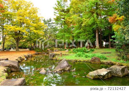 晩秋に色づく茅ヶ崎中央公園の木々と水面が緑に映る池 72132427