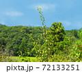 晴れの日の夏山と青空と白雲の写真 72133251