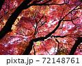 紅い紅葉 72148761
