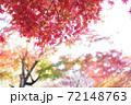 紅葉 72148763
