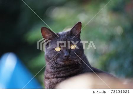 物陰からひょっこり顔を出す黒猫 72151621