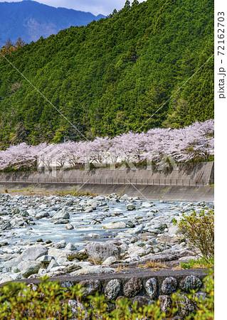 川沿いの桜並木(戸栗川親水公園) 72162703
