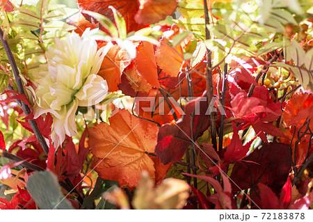 ドライフラワーの秋イメージの背景 72183878