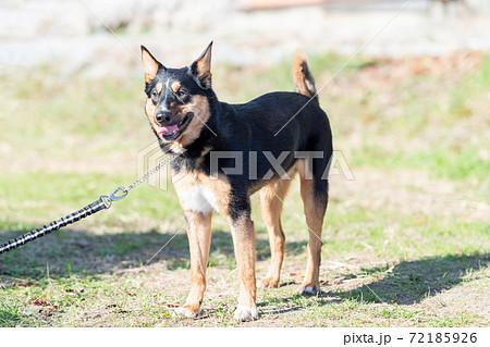 散歩する犬 72185926
