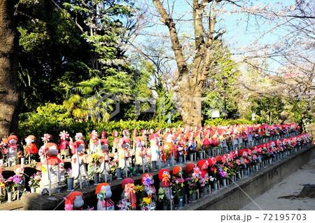 増上寺の水子地蔵が並んでいる風景 72195703