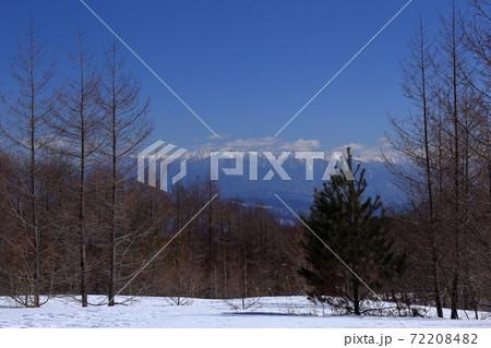 木々の間から見えるすっかり雪化粧の中央アルプス 72208482