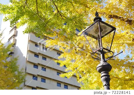 横浜山下公園通りの銀杏と街燈の景色 72228141