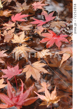 紅葉の後の素敵な景色!水に浮かぶモミジの葉 72252858