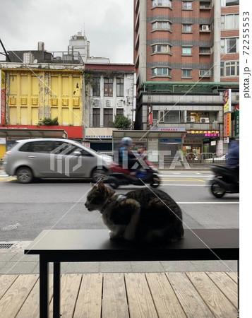 車通りの多い道路でひと休みする猫 72255553