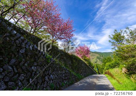 【国道439号線】遅咲きの桜の道 72256760