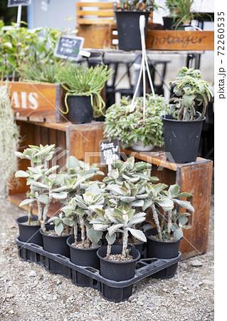 ガーデニングショップのカランコエと多肉植物の鉢植え 72260535