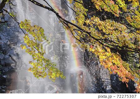 虹と滝と紅葉 72275307
