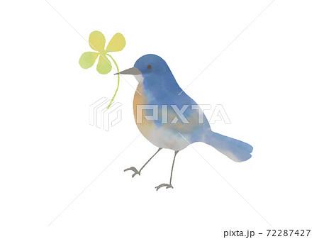 小鳥とクローバー 72287427