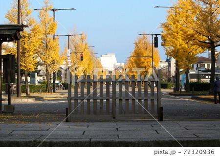 黄色く染まったイチョウの木の道路 72320936