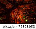 【香川県 高松市】秋の夜間ライトアップの栗林公園 日本庭園 72323953