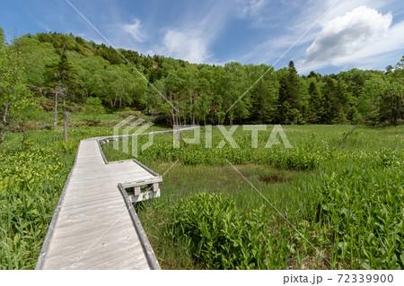 初夏の万座温泉 牛池と周辺遊歩道 72339900