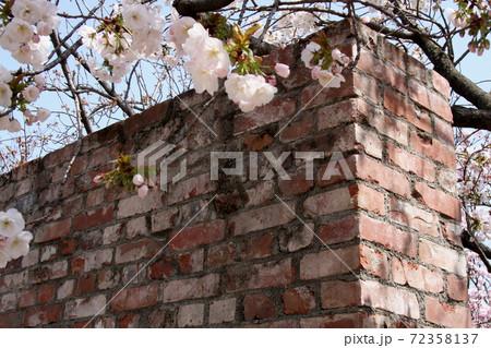大阪造幣局桜の通り抜けでのひとこま 72358137