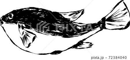 墨で描いたアートなフグのイラスト 72384040