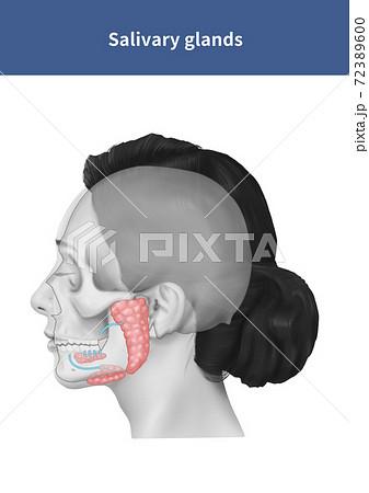 骨 機関 解剖学 72389600