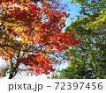 秋の紅葉や木々を下から見上げる背景イメージ 72397456
