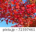 秋の紅葉や木々を下から見上げる背景イメージ 72397461