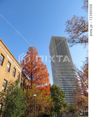 広島大学旧理学部1号館と並ぶメタセコイアと高層マンション 72399300