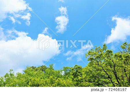 初夏の青空と新緑の木々 72408197