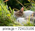 草むらのなかで昼寝をする茶色と白色の野良猫 72413106
