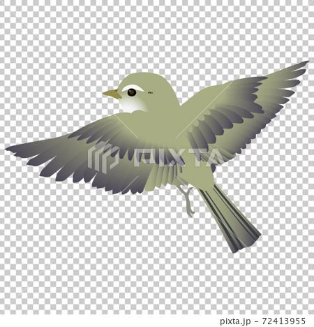 矢量圖的可愛的野鳥Uguisu撲 72413955