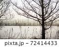 冬の北海道十勝の雪原、木のシルエット 72414433