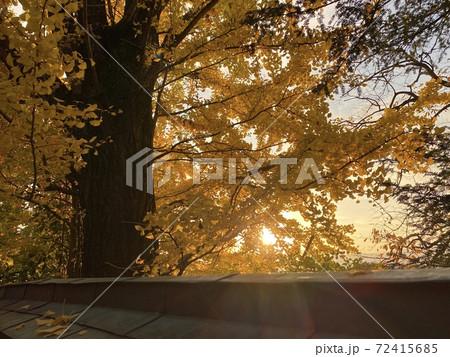 イチョウと屋根 夕暮れ時の秋の風景 72415685