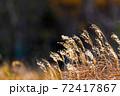 風になびくススキの風景 72417867