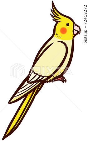 ペットの鳥のオカメインコのイラスト 72418272