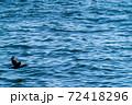 海鵜(ウミウ)が海面すれすれを飛ぶ風景 72418296