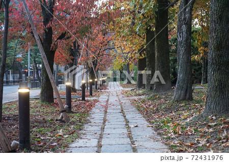 秋の京都 京都美術館の東側の紅葉の小道 72431976