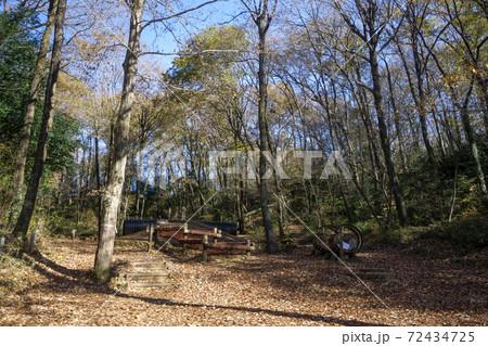 紅葉の狭山丘陵 あそびの森のコナラの林 72434725