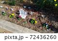 こじま花の会花畑のビオラとシロタエギク 72436260