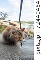 【広島県】尾道の千光寺山に登る坂道に猫がいる風景 72440484