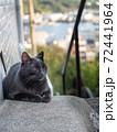 【広島県】尾道の千光寺山に登る石段に座る黒猫の子猫 72441964