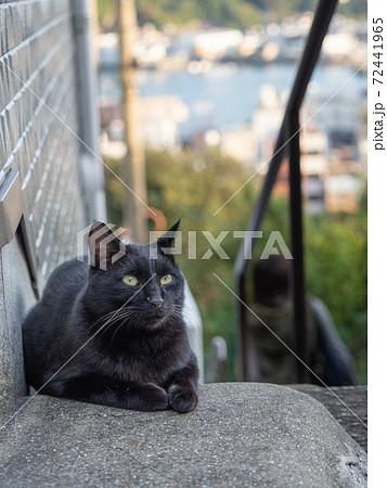 【広島県】尾道の千光寺山に登る石段に座る黒猫の子猫 72441965