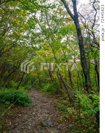 森の中の砂利道 (那須平成の森、栃木県) 72445823