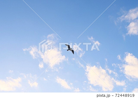 青空高く飛ぶ鳥~かもめ 72448919