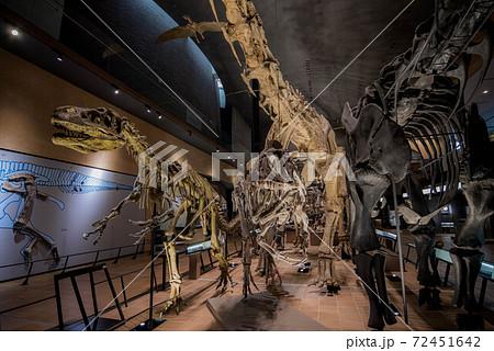恐竜 化石 72451642
