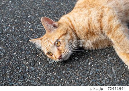 茶色の猫が道路に寝そべっている姿 目が大きく可愛い猫 72451944
